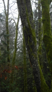 trees with moss