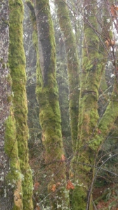 trees with moss 3