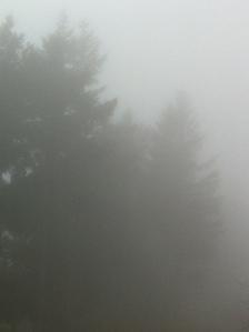 foggy day 014