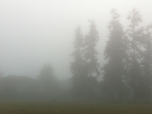 foggy day 021