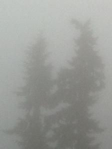 foggy day 022