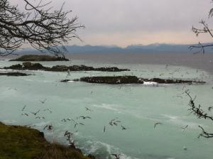 sea lions 088