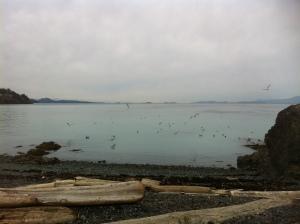 sea lions 126
