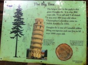 big trees 022