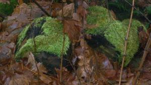 heart moss