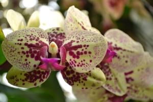 kew gardens orchids 045