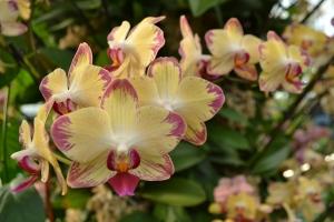 kew gardens orchids 068