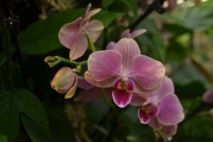 kew gardens orchids 072