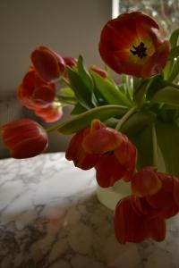 tulips 022