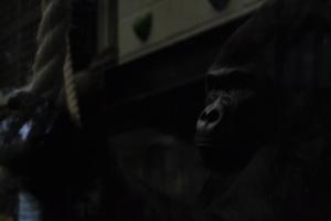 london zoo nov 2014 072