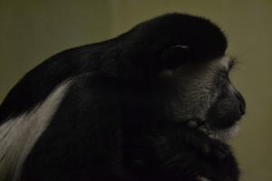 london zoo nov 2014 080