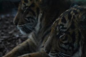 london zoo nov 2014 099