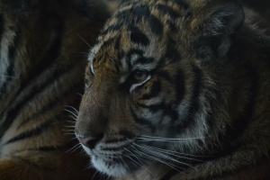 london zoo nov 2014 103
