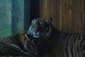 london zoo nov 2014 104