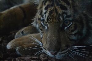london zoo nov 2014 106