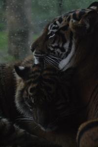 london zoo nov 2014 112