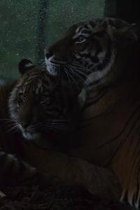 london zoo nov 2014 122