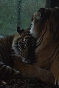 london zoo nov 2014 127