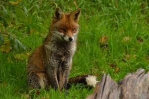 wildlife park 470