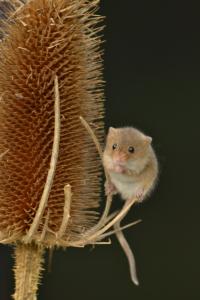 wildlife-park-909.jpg mouse
