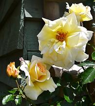 flower 56